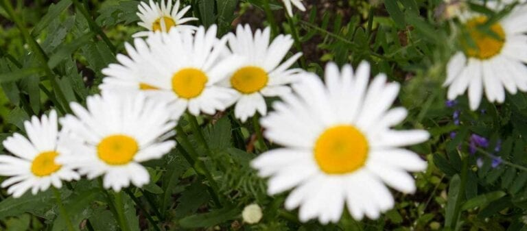 белые и желтые цветы